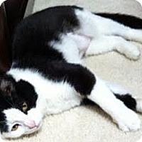 Adopt A Pet :: Moo Moo - Alexandria, VA