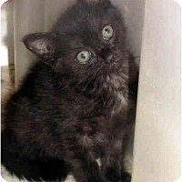 Adopt A Pet :: Cleo - Xenia, OH
