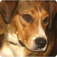 Adopt A Pet :: Gus - Jacksonville, FL