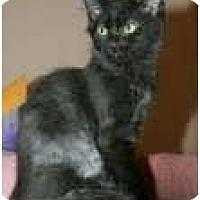 Adopt A Pet :: Ripley - Arlington, VA
