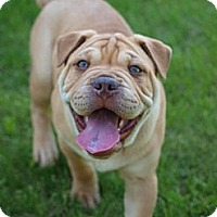 Adopt A Pet :: RichmondADOPTION PENDING - Toronto/Etobicoke/GTA, ON