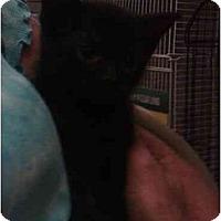 Adopt A Pet :: Debra - Reston, VA