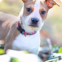 Adopt A Pet :: Cami - Adoption Pending - Greensboro, NC