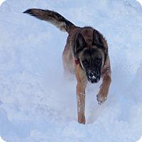 Adopt A Pet :: STEPH aka OLAF - Tully, NY