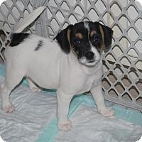 Adopt A Pet :: Rayne - Minneola, FL