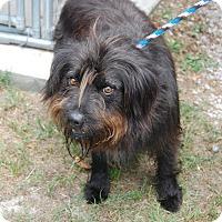Adopt A Pet :: Zack - Manning, SC