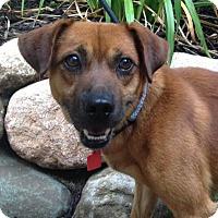 Adopt A Pet :: Beans - Fennville, MI