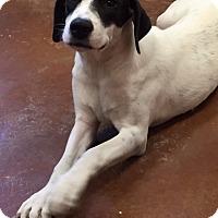 Adopt A Pet :: Baby - Charlemont, MA