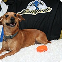 Adopt A Pet :: Scooter - Sioux Falls, SD