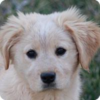 Adopt A Pet :: Janie - Bedminster, NJ