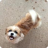 Adopt A Pet :: Hendrix - Aurora, CO