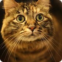 Adopt A Pet :: Brianna - Canoga Park, CA