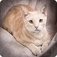 Adopt A Pet :: CEDAR - Anna, IL