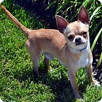 Adopt A Pet :: Frankie - Bridgeton, MO
