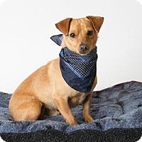 Adopt A Pet :: *RAGS - Sacramento, CA