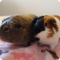 Adopt A Pet :: Darwin & Kai - Fullerton, CA