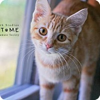 Adopt A Pet :: Turnip - Edwardsville, IL