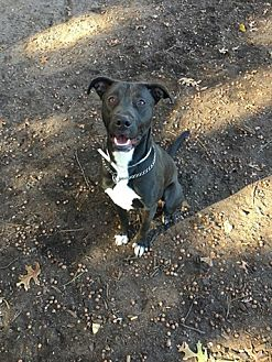 Labrador Retriever Mix Dog for adoption in Brookhaven, New York - Finnegan