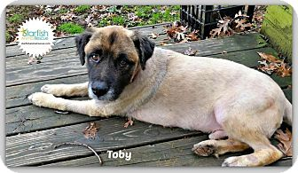 Chow Chow/Collie Mix Dog for adoption in Plainfield, Illinois - Toby