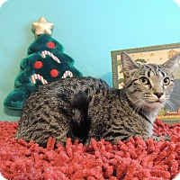 Adopt A Pet :: Emily - Roanoke, TX