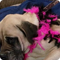 Adopt A Pet :: Zoey - Yakima, WA