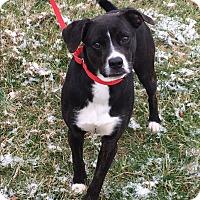 Adopt A Pet :: MALLORY - LaGrange, KY