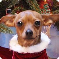 Adopt A Pet :: Roxy - Dundee, MI