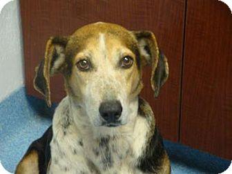 Foxhound Mix Dog for adoption in Gainesville, Florida - Valentina