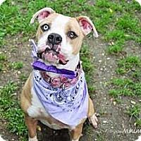 Adopt A Pet :: Pinky - East Rockaway, NY