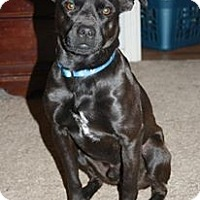 Adopt A Pet :: Persious - Austin, AR