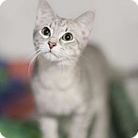 Adopt A Pet :: Stormy - Chicago, IL