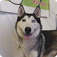 Adopt A Pet :: Suiki - Las Vegas, NV