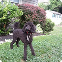 Adopt A Pet :: Mike - Wilmington, MA