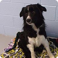 Adopt A Pet :: Tate - Muskegon, MI