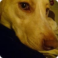 Adopt A Pet :: Farrah - kennebunkport, ME