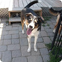 Adopt A Pet :: Zhu (Courtesy Listing from Porter IN) - Plymouth, IN