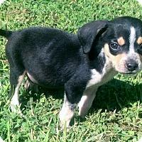 Adopt A Pet :: Macy - Smyrna, GA