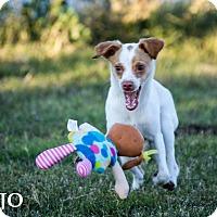 Adopt A Pet :: Mojo - Patterson, CA