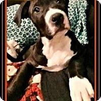 Adopt A Pet :: Rowdy - Rancho Cucamonga, CA
