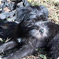 Adopt A Pet :: Leo - Sinking Spring, PA
