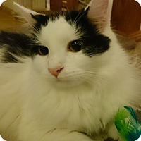 Adopt A Pet :: Alex - Morganton, NC