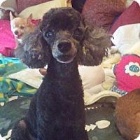 Adopt A Pet :: Carlton - Brooksville, FL