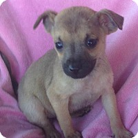 Adopt A Pet :: Elliana - Trenton, NJ