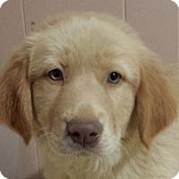 Adopt A Pet :: Cookie AD 06-11-16 - Preston, CT