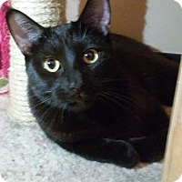 Adopt A Pet :: Shadow - Yorba Linda, CA
