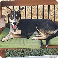 Adopt A Pet :: Ace - Spring, TX