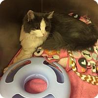 Adopt A Pet :: Nova - Montgomery, IL