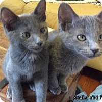 Adopt A Pet :: Stella - Fullerton, CA