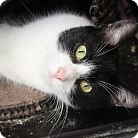 Adopt A Pet :: Marisol - Indianapolis, IN