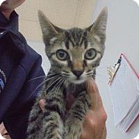 Adopt A Pet :: C20 Litter-Swiper - Livonia, MI